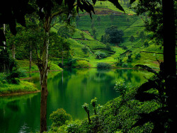 travelthisworld:  Nuwara Eliya, Sri Lanka