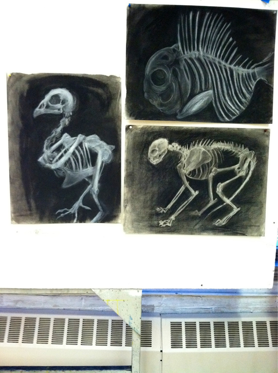 Skeletal studies