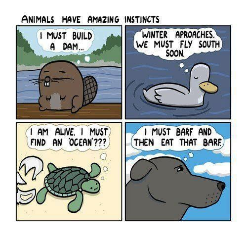 Animals have amazing instincts..