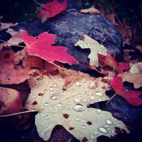 #leaf #leaves #fall #dew #rain #utah #slc #autumn (Taken with Instagram)