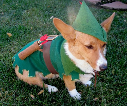 corgiaddict:  Robbing from the rich, and giving to the poor. Carrot-hood!