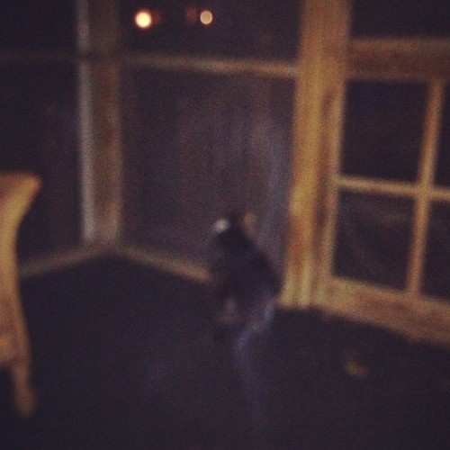 Noir bein curious  (Taken with Instagram at sun room)