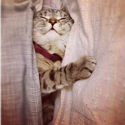 nala_cat:  This is the first photo of nala that went to popular page.. I guess a lot of people haven't seen it. It's one of my favorite photo of her! Thank you so much for all the supports everyone :) 😻😽😻 http://instagr.am/p/QF-uOPrCxD/
