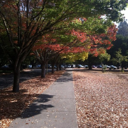 I love taking this walkway, so lovely! #nofilter #autumn (Taken with Instagram)