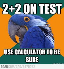 9gag:  Paranoid Parrot doing maths
