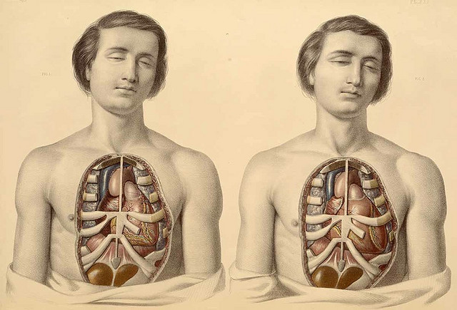 coffeepeople:  Francis Sibson, anatomist, and William Fairland, artist, 19th C by astropop on Flickr.