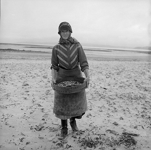 Mrs Lettice Rees harvesting cockles on Cefn Sidan beach, Pembrey by LlGC ~ NLW on Flickr.