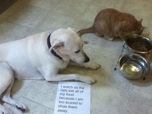 dogshaming:  And I am hungry..