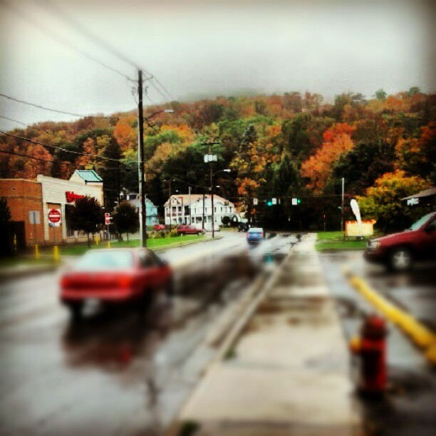 Pretty fall trees (Taken with Instagram)