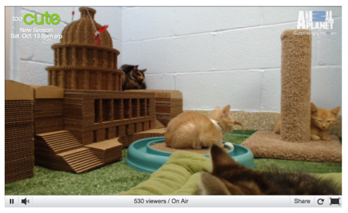 uh, no big deal or anything, but THERE'S A LIVE KITTEN CAM HAPPENING RIGHT NOW AND YOU NEED TO SEE IT!