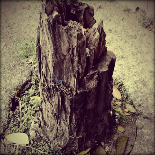 Feverish. Gloomy. Hollow. But there will be better days. #treestump_series #treestump  (Taken with Instagram)