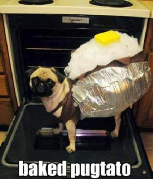 Introducing the Baked Pugtato The fur is the most nutritious part.