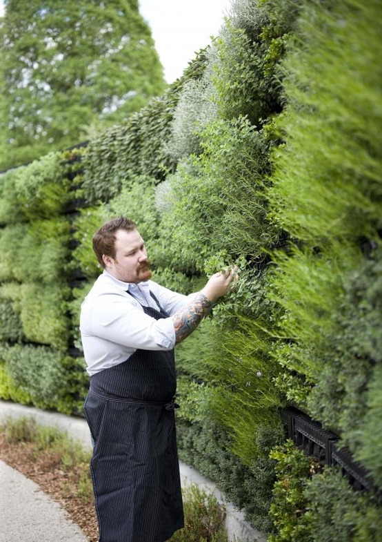 squaremeal:  Herb garden wall. Yes!!! Pick that shit! (via garden / herb garden wall ♥)
