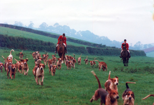 hounddogsrunning:  Fox Hunt, circa 1962  Is it hunting season yet?!? I say!
