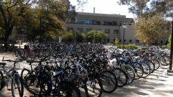 krogan-kraken:  Meanwhile at UC Davis