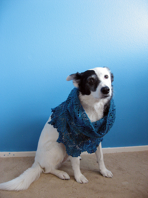 dogswearingscarves:  Tidewater_Cowl_22 by MissMarnie on Flickr.