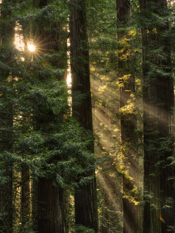 woodendreams:   (by ER Post)