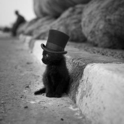 (via It's wearing a top hat! - Imgur)