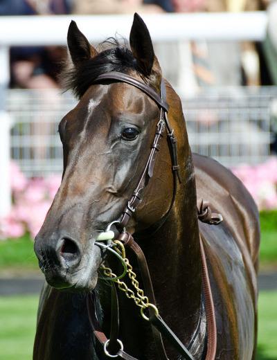 Afonso de Sousa, a half brother to near-Triple Crown winner Big Brown sired by multi-G1 winner Henrythenavigator, was scratched in today's first Derby qualifier/Breeders' Cup Juvenile Turf berth at Newmarket (and one of the few European preps) won by Steeler, one of the first sons of Breeders' Cup Classic winner Raven's Pass. Trained by Aidan O'Brien, Afonso de Sousa broke his maiden immediately at Leopardstown by an easy 9 lengths. *adds to the list*