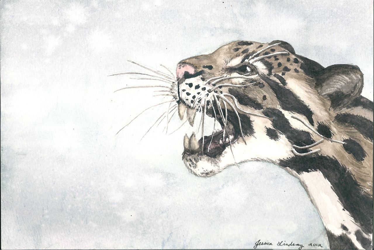 evil-giraffe:  Clouded leopard, watercolor. Based on one of my photos from the San Diego Zoo.