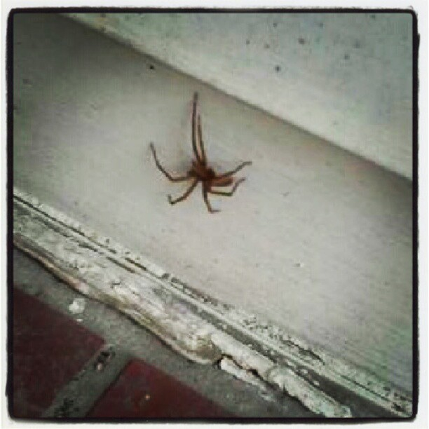 OMG … this thing attacked me! (Taken with Instagram)