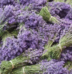I love handfuls of fresh lavender in the house!