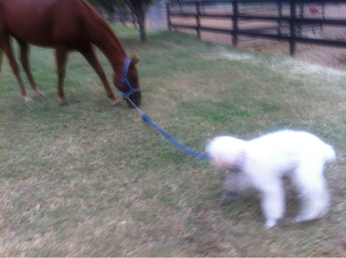 "Effie is learning a new trick, it's called ""get the pony""   Cash is not impressed and he has a new trick too. It's called ""ignore that asshole dog"""