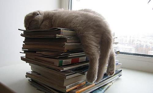 Too much book learning can make a kitty weary