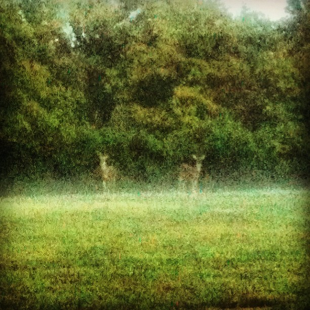 All we are is bucks in the mist. (Taken with Instagram)