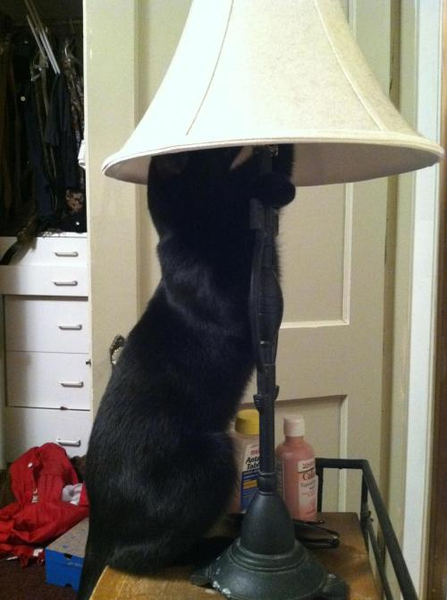 selling one cat lamp