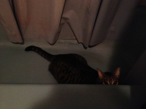 I'm in the bathroom and my cat jumped into the tub and is staring at me I'm afraid to move