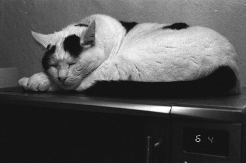 Cat on microwave. Nikon F100 film Kodak TMax 3200
