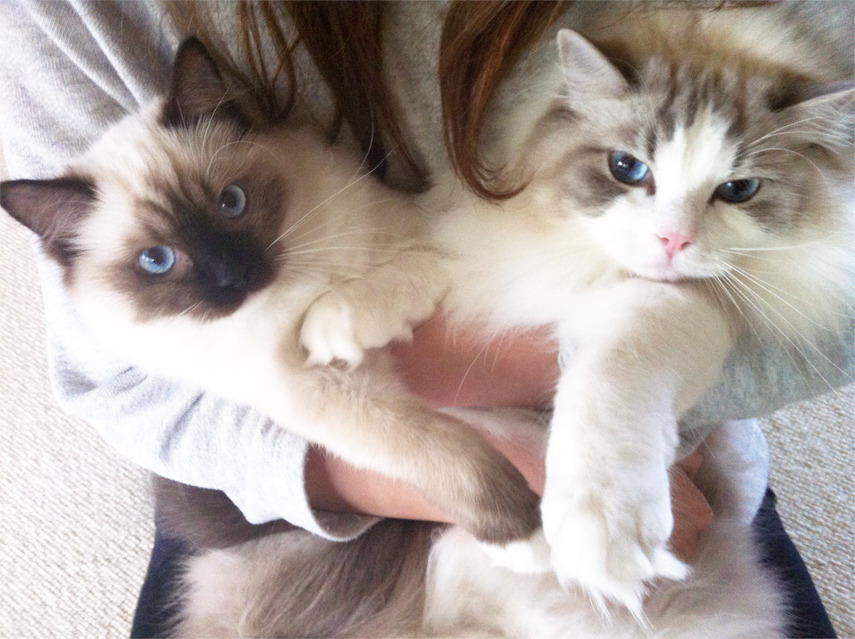 awklicious:  these cats are just gorgeous
