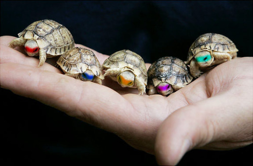 meme4u:  http://memeblock.com/  Lol I'm seriously obsessed with tiny turtles