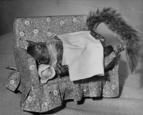 laughingsquid:  Tommy Tucker the squirrel, 1940s  This makes me oh so happy and oh so weirded out.