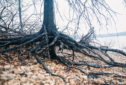 marisais:  roots. by nataliecreates on Flickr.