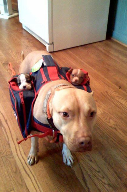 leftshoeowl:  Sub woofers :'D