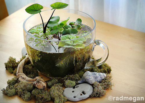 theaveragedream:  Tabletop water garden tutorial. Follow theaveragedream on Tumblr for more DIY tutorials, with more on my Pinterest!