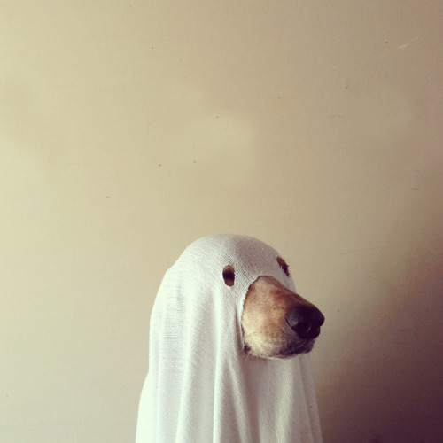 Happy Halloween from scary ghost dog.