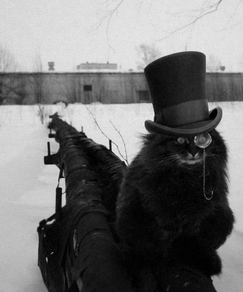 gdfalksen:  Top hat kitty all grown up.