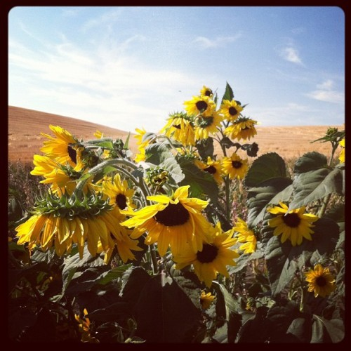 Picking beautiful flowers!!! (Taken with Instagram)