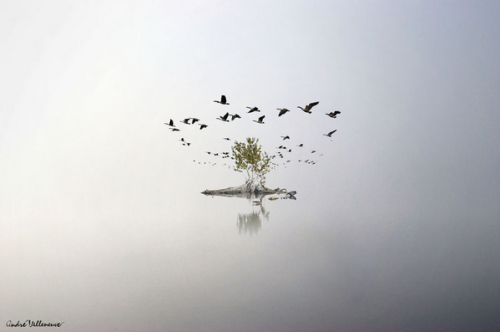 """The Round of Geese"" by Andre Villeneuve"