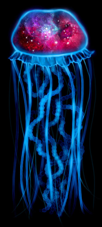 The Universe is a Jellyfish - new version by *Riemea —-x—- More: | Animals | Random |