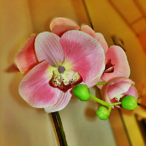 #Orchids, at the #gym. #Pretty! #Flower #pink #green  (Taken with Instagram)