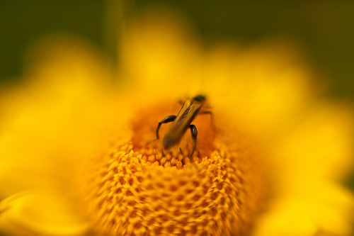 Bug On Yellow Flower on Flickr.