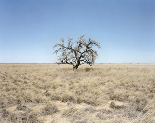 Peter Brown, Apricot Tree, Lingo, New Mexico, 2004