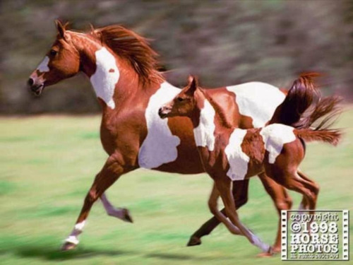 keepcalmandride-on:  heelsdownandbreathe:  Almost identical markings. Amazing!!! Found on Pinterest   This looks photoshopped…