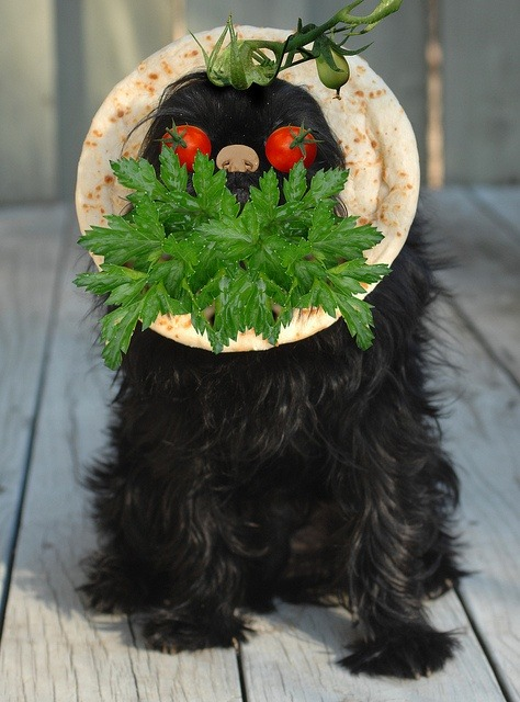 Veggie Griff. gizveggie by eligmon, via Flickr