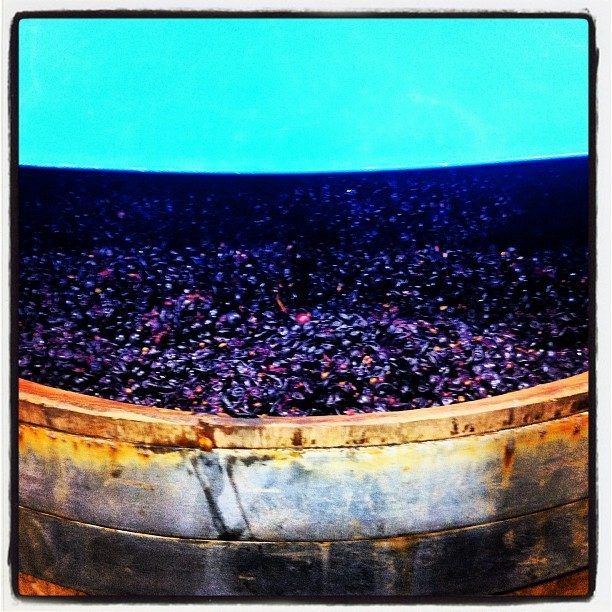 #Fermenting #grapes #wine #winery  (Taken with Instagram)