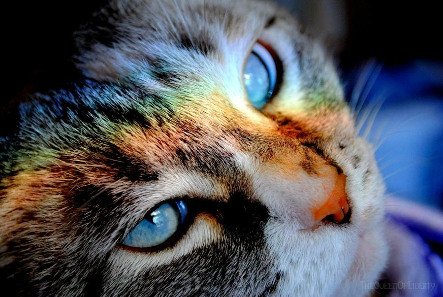 photogenicfelines:  (TheQueenOfLiberty)